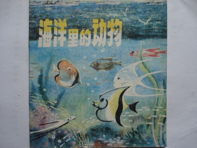 海洋里的动物
